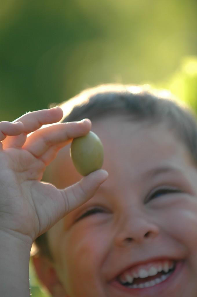 Olive picking 1